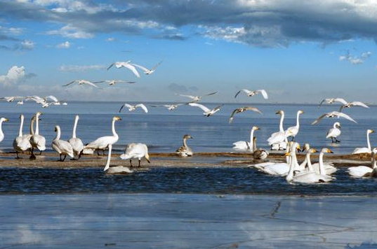 青海湖景区简介,青海湖在那?青海湖门票多少钱?