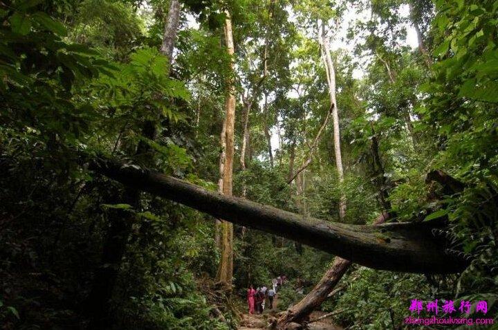 向游客充分展现了原始森林,野生动物,民俗风情三大主题.