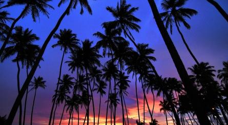 暑期8天畅享斯里兰卡