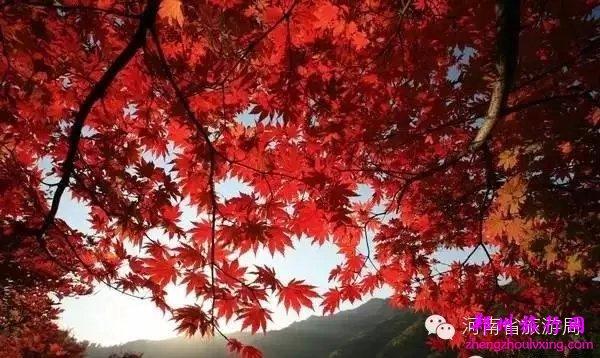 洛阳白云山风景区