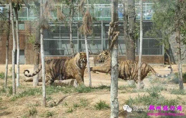 五龙山动物园宜昌大坝攻略一日游自驾图片
