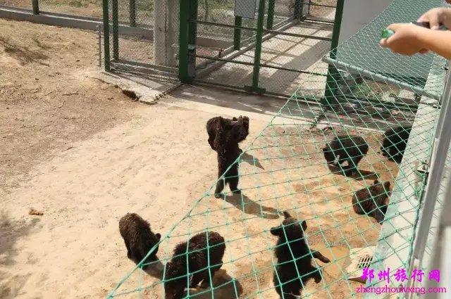 五龙山野生动物园
