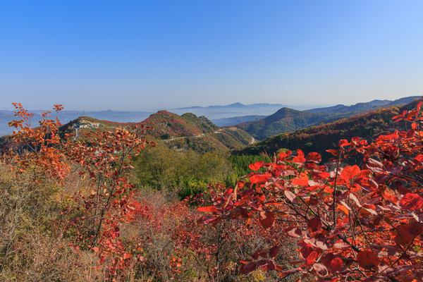 长寿山看红叶一日游